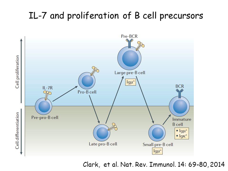 IL-7 and proliferation of B cell precursors Clark, et al. Nat. Rev. Immunol. 14: 69-80, 2014