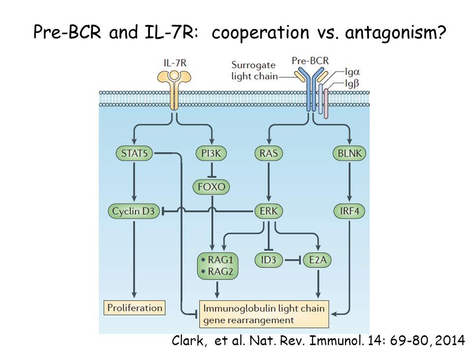 Pre-BCR and IL-7R: cooperation vs. antagonism? Clark, et al. Nat. Rev. Immunol. 14: 69-80, 2014