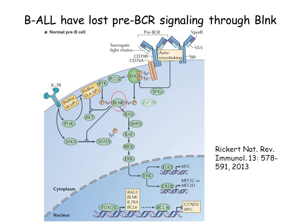 B-ALL have lost pre-BCR signaling through Blnk Rickert Nat. Rev. Immunol. 13: 578- 591, 2013