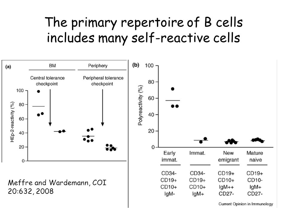 The primary repertoire of B cells includes many self-reactive cells Meffre and Wardemann, COI 20:632, 2008