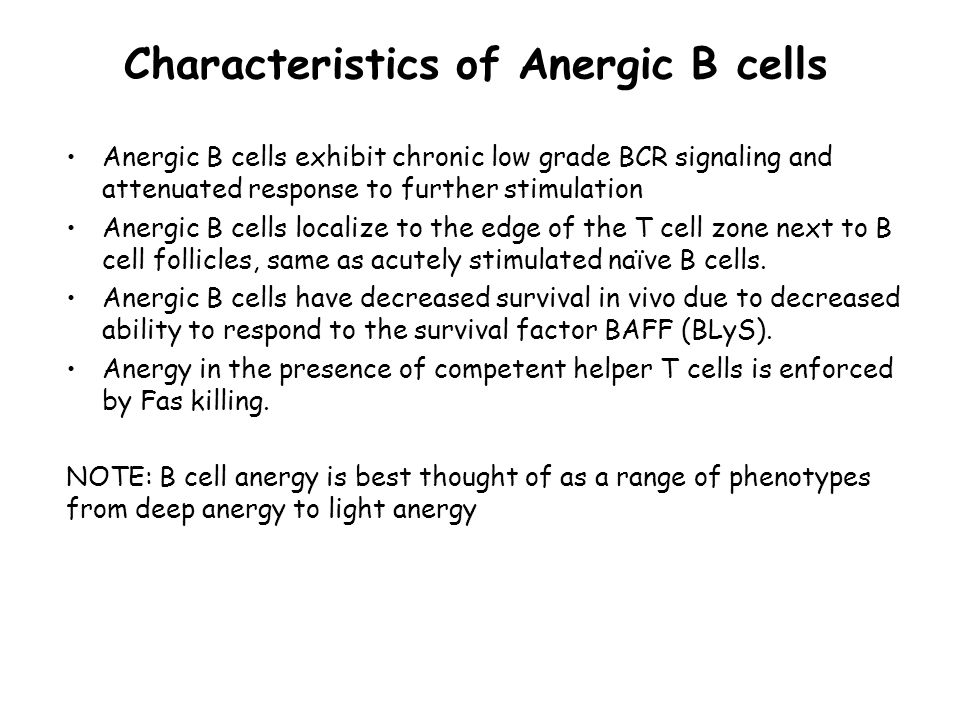 Characteristics of Anergic B cells Anergic B cells exhibit chronic low grade BCR signaling and attenuated response to further stimulation Anergic B cells localize to the edge of the T cell zone next to B cell follicles, same as acutely stimulated naïve B cells.
