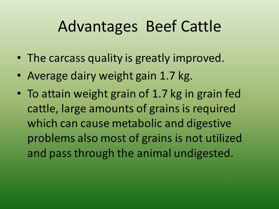 Advantages Beef Cattle The carcass quality is greatly improved. Average dairy weight gain 1.7 kg. To attain weight grain of 1.7 kg in grain fed cattle