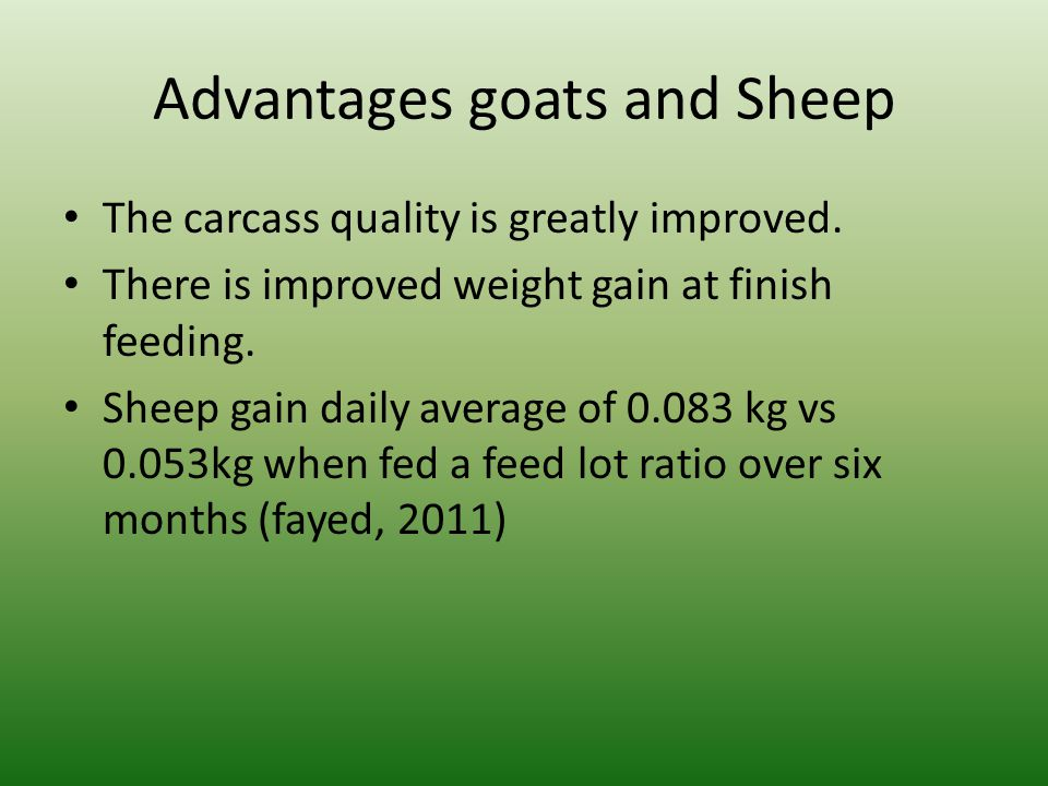 Advantages goats and Sheep The carcass quality is greatly improved. There is improved weight gain at finish feeding. Sheep gain daily average of 0.083