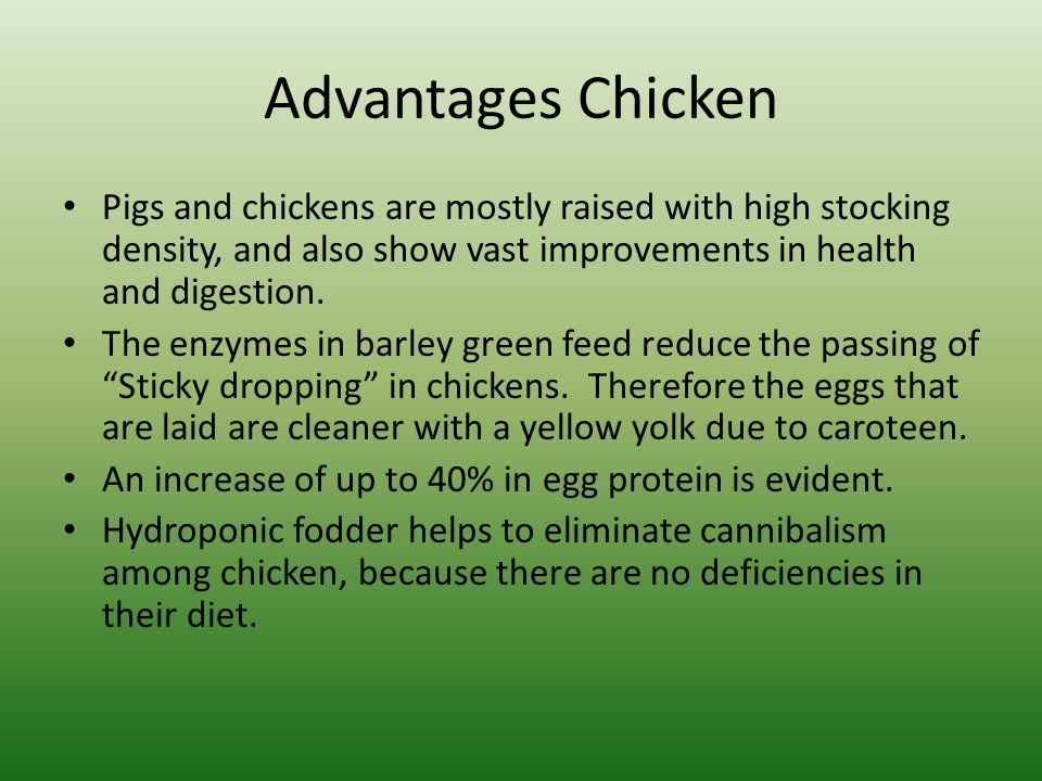 Advantages Chicken Pigs and chickens are mostly raised with high stocking density, and also show vast improvements in health and digestion. The enzyme