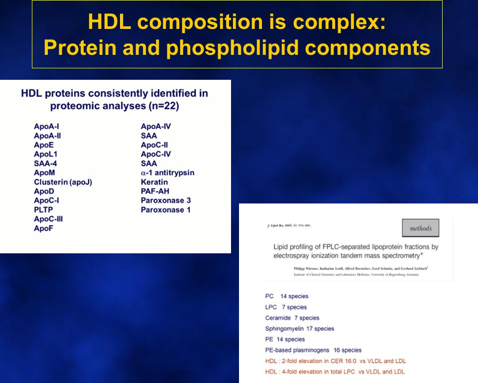 HDL composition is complex: Protein and phospholipid components