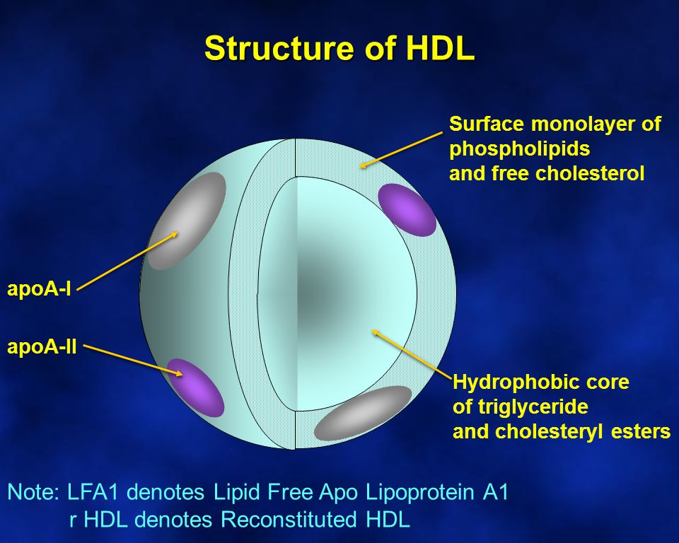 Structure of HDL Surface monolayer of phospholipids and free cholesterol Hydrophobic core of triglyceride and cholesteryl esters apoA-I apoA-II Note: