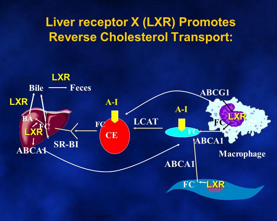 A-I CE FC LCAT Bile SR-BI A-I ABCA1 Macrophage Feces FC BA Liver receptor X (LXR) Promotes Reverse Cholesterol Transport: ABCG1 FC LXR LXR LXR ABCA1 LXR LXR