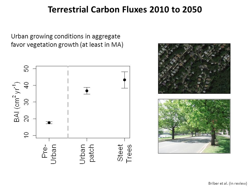 Briber et al. (in review) Urban growing conditions in aggregate favor vegetation growth (at least in MA) Terrestrial Carbon Fluxes 2010 to 2050