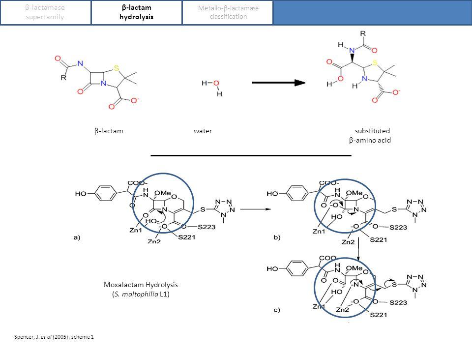 β-lactamase superfamily β-lactam hydrolysis Metallo-β-lactamase classification β-lactam water substituted β-amino acid c c Moxalactam Hydrolysis (S.