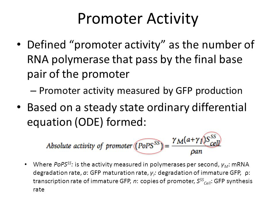 Promoter Activity Defined promoter activity as the number of RNA polymerase that pass by the final base pair of the promoter – Promoter activity measured by GFP production Based on a steady state ordinary differential equation (ODE) formed: Where PoPS SS : is the activity measured in polymerases per second, γ M : mRNA degradation rate, a: GFP maturation rate, γ I : degradation of immature GFP, ρ: transcription rate of immature GFP, n: copies of promoter, S SS Cell : GFP synthesis rate