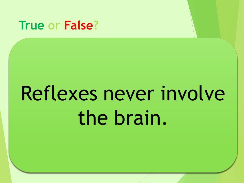 True or False? Reflexes never involve the brain.