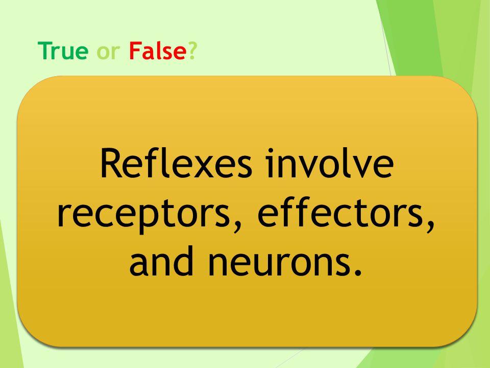 True or False? Reflexes involve receptors, effectors, and neurons.