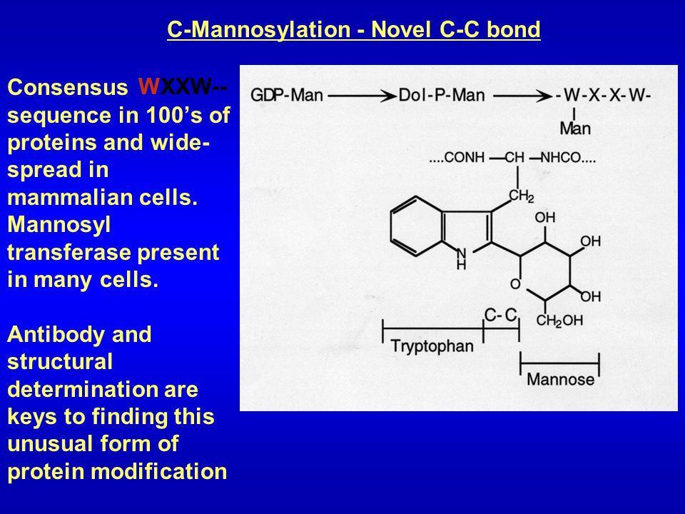 C-Mannosylation - Novel C-C bond Consensus sequence in 100's of proteins and wide- spread in mammalian cells. Mannosyl transferase present in many cel
