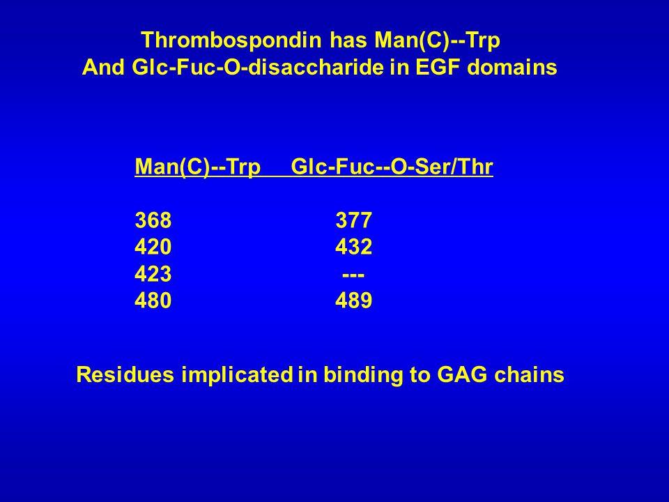 Thrombospondin has Man(C)--Trp And Glc-Fuc-O-disaccharide in EGF domains Man(C)--Trp Glc-Fuc--O-Ser/Thr 368377 420432 423 --- 480489 Residues implicated in binding to GAG chains