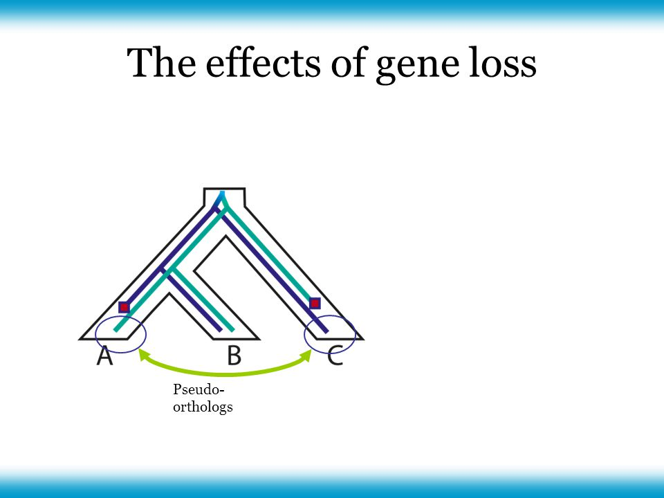 The effects of gene loss Pseudo- orthologs