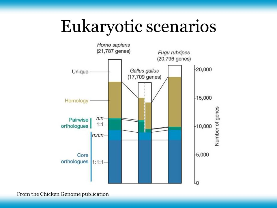 From the Chicken Genome publication Eukaryotic scenarios