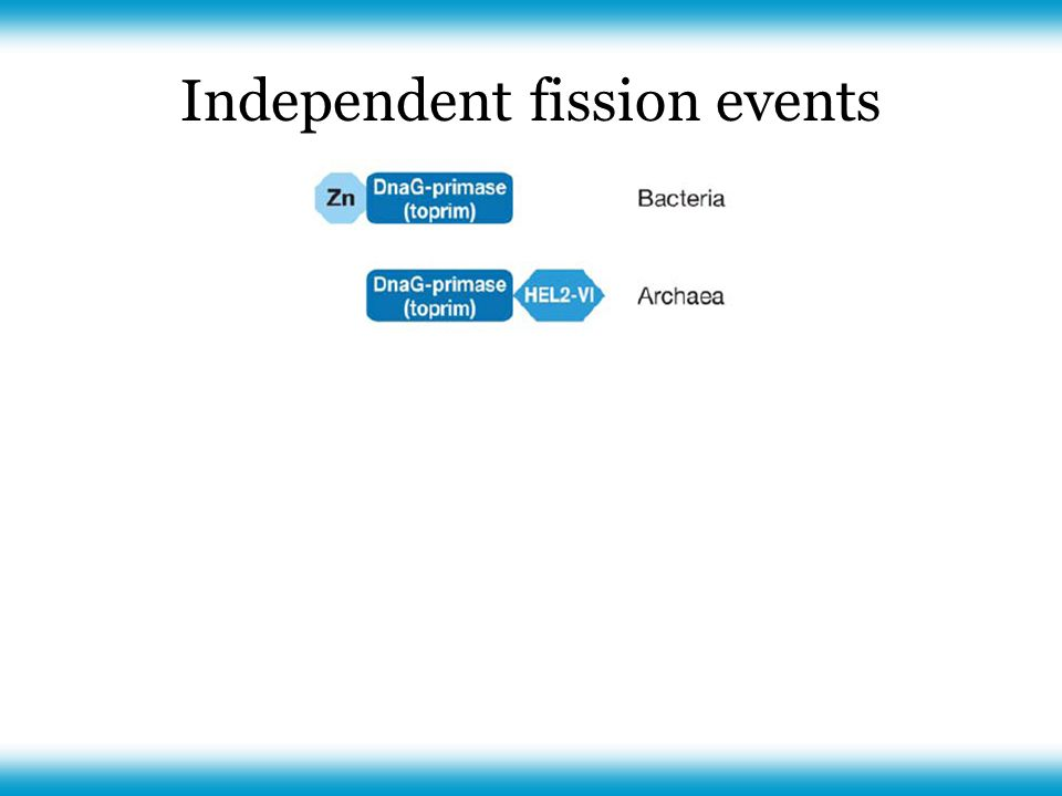 Independent fission events