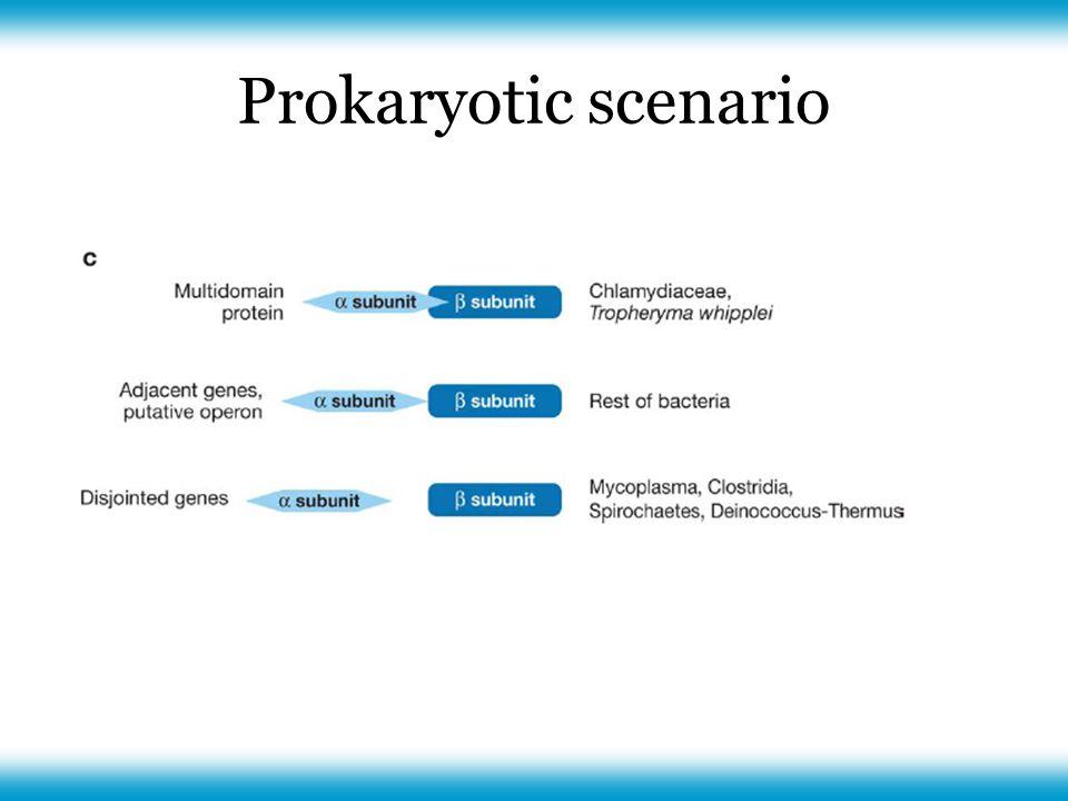 Prokaryotic scenario