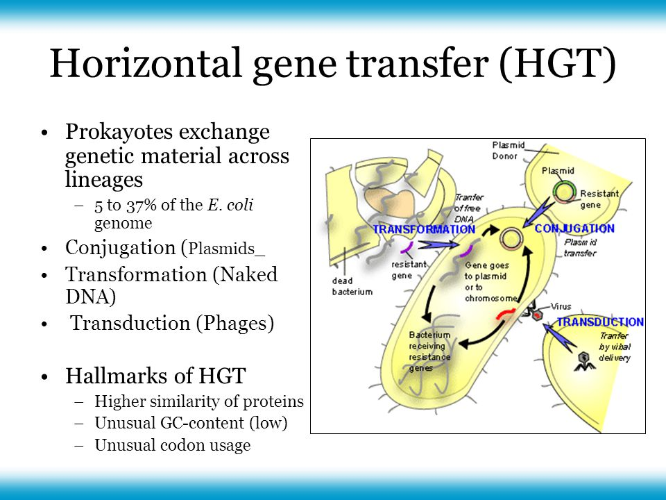 Horizontal gene transfer (HGT) Prokayotes exchange genetic material across lineages –5 to 37% of the E.