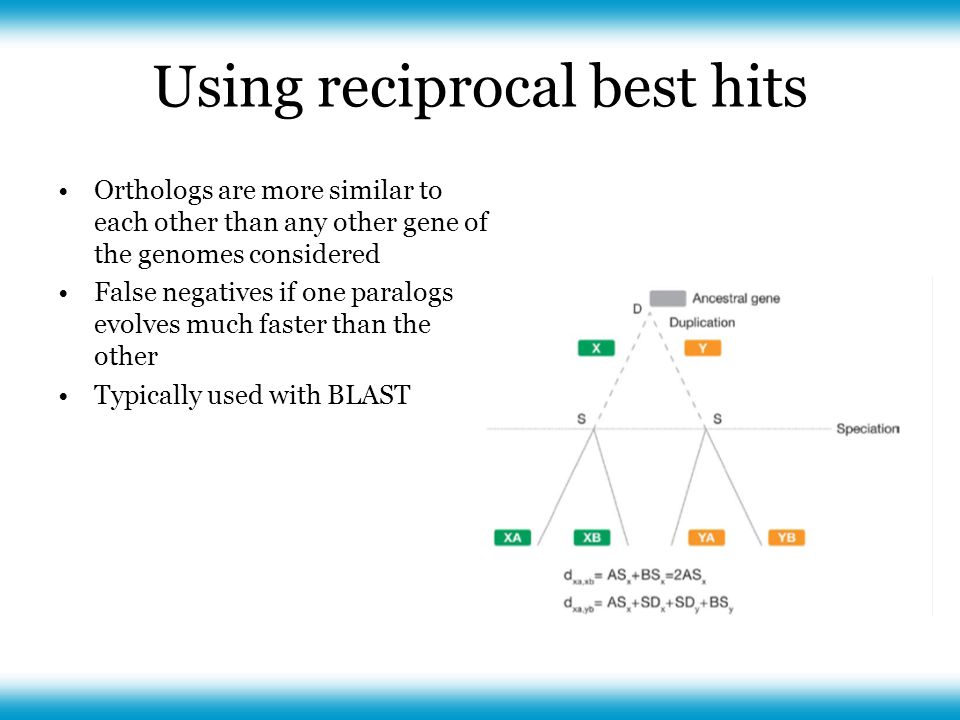 Using reciprocal best hits Orthologs are more similar to each other than any other gene of the genomes considered False negatives if one paralogs evolves much faster than the other Typically used with BLAST