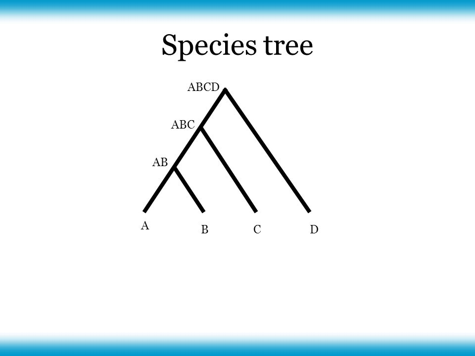 Species tree A CBD AB ABC ABCD
