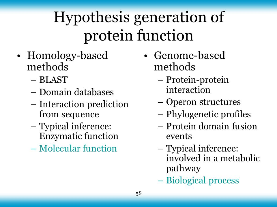 58 Hypothesis generation of protein function Homology-based methods –BLAST –Domain databases –Interaction prediction from sequence –Typical inference: Enzymatic function –Molecular function Genome-based methods –Protein-protein interaction –Operon structures –Phylogenetic profiles –Protein domain fusion events –Typical inference: involved in a metabolic pathway –Biological process