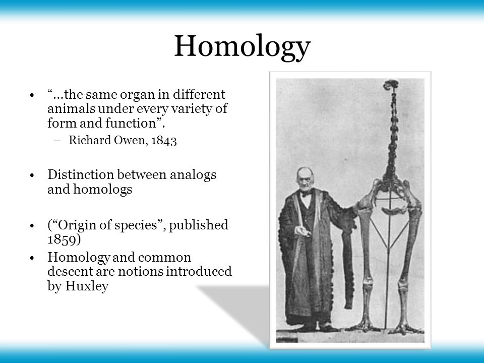 Homology …the same organ in different animals under every variety of form and function .