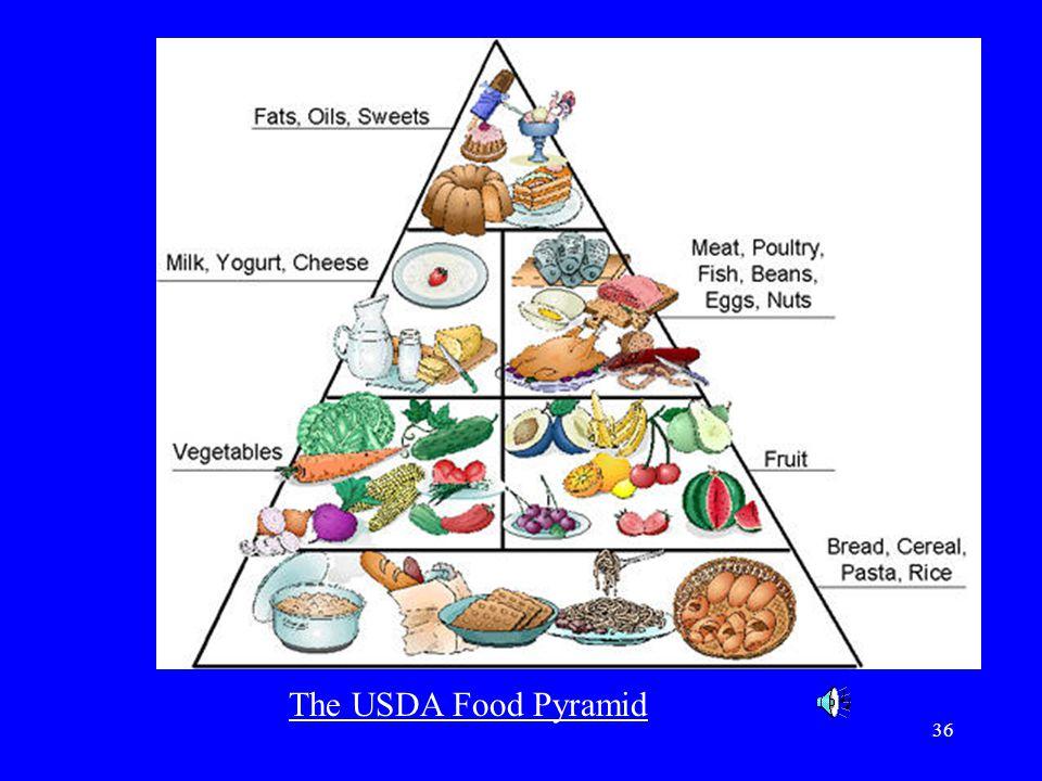 36 The USDA Food Pyramid