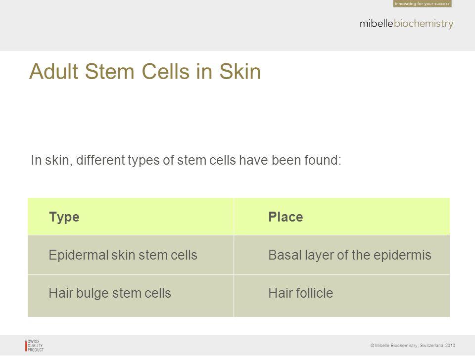 © Mibelle Biochemistry, Switzerland 2010 Adult Stem Cells in Skin In skin, different types of stem cells have been found: TypePlace Epidermal skin ste