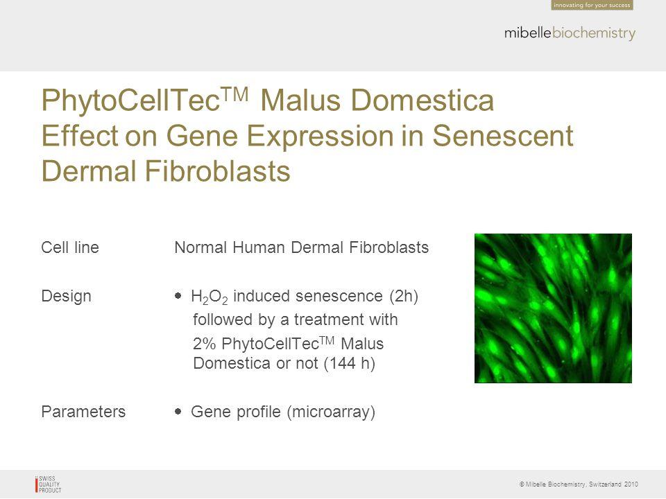 © Mibelle Biochemistry, Switzerland 2010 PhytoCellTec TM Malus Domestica Effect on Gene Expression in Senescent Dermal Fibroblasts Cell lineNormal Hum