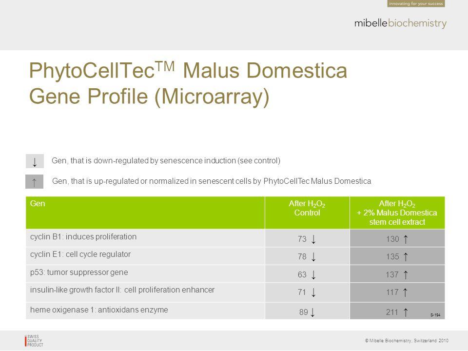 © Mibelle Biochemistry, Switzerland 2010 PhytoCellTec TM Malus Domestica Gene Profile (Microarray) ↑ ↓ Gen, that is down-regulated by senescence induc
