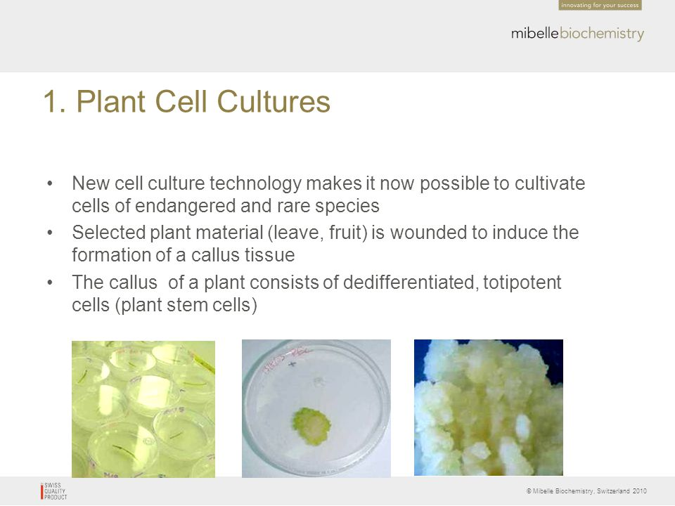 © Mibelle Biochemistry, Switzerland 2010 Result PhytoCellTec apple stem cell extract enhanced CFE up to 92% compared to the control.