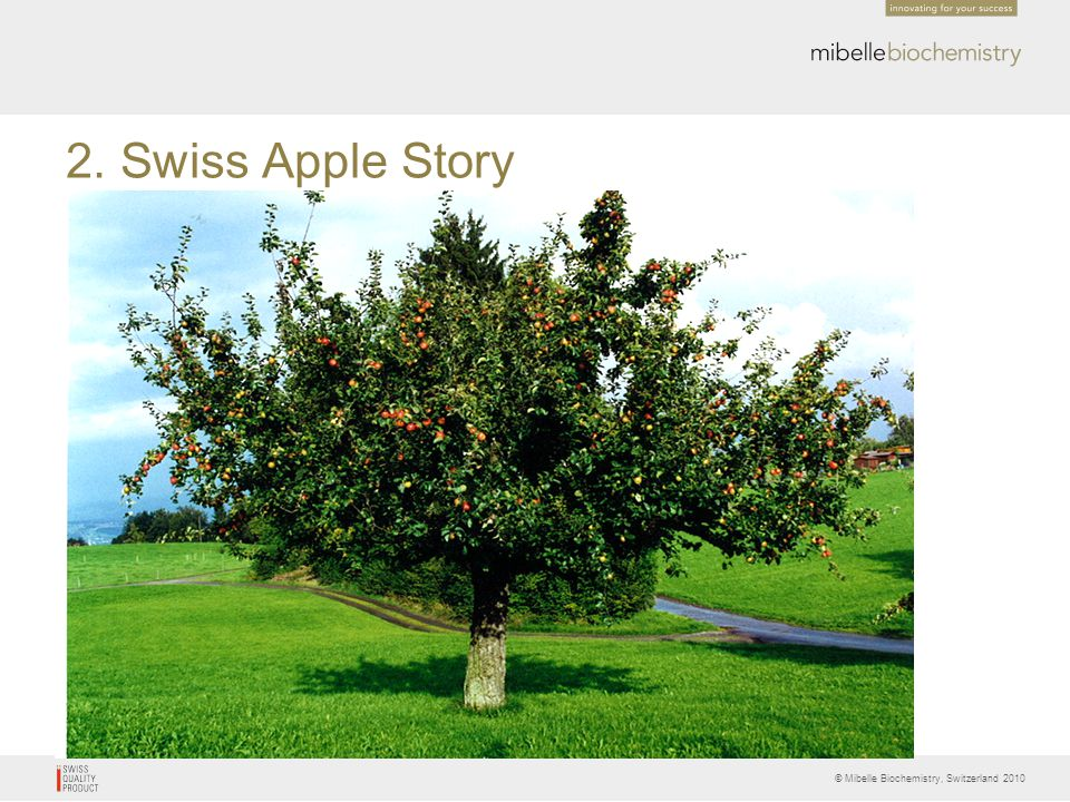 © Mibelle Biochemistry, Switzerland 2010 Storage Ability of Apples and Skin Aging Apples with very good storage abilities stay fresh over months This was an important factor for cultivar selection Modern apple cultivars are selected for intensive cultivation and for a sweet flavour since storage is no longer a problem Therefore cultivars with excellent storage abilities disappeared from the market