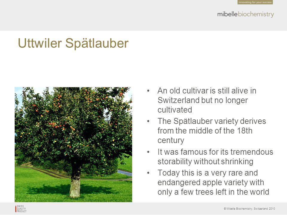 © Mibelle Biochemistry, Switzerland 2010 Uttwiler Spätlauber An old cultivar is still alive in Switzerland but no longer cultivated The Spätlauber var