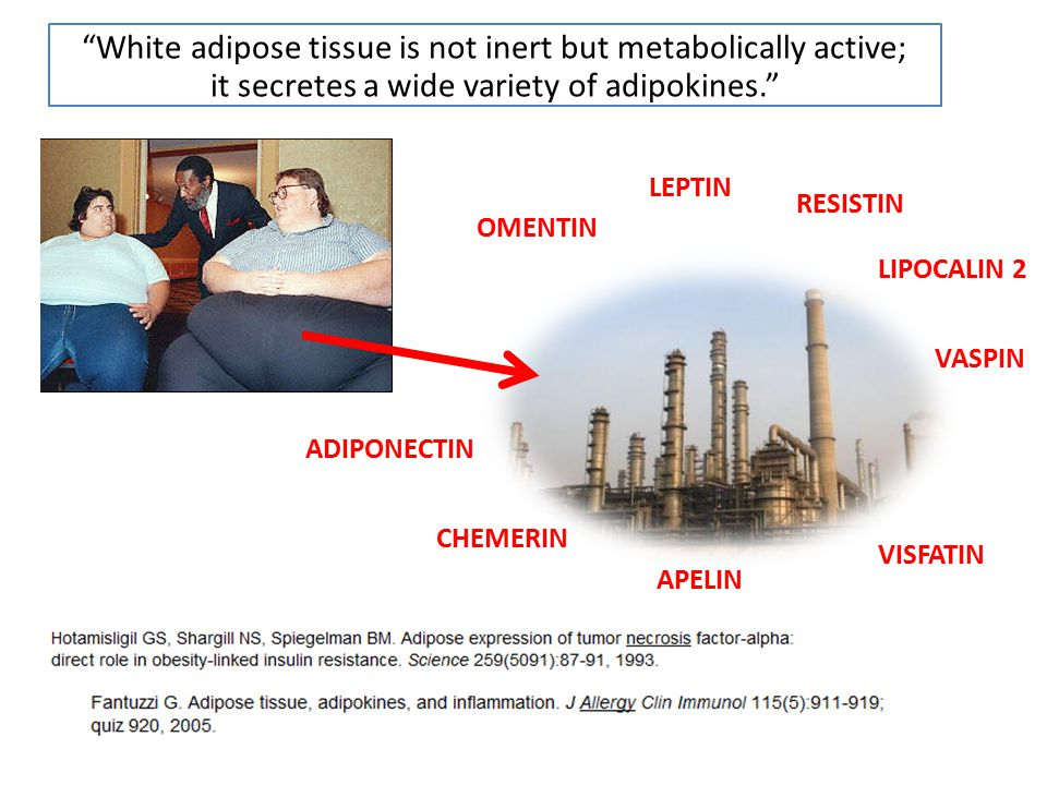 """""""White adipose tissue is not inert but metabolically active; it secretes a wide variety of adipokines."""" LEPTIN ADIPONECTIN CHEMERIN LIPOCALIN 2 VASPIN"""