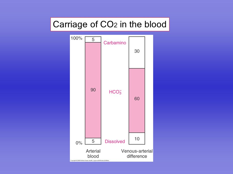 Carriage of CO 2 in the blood