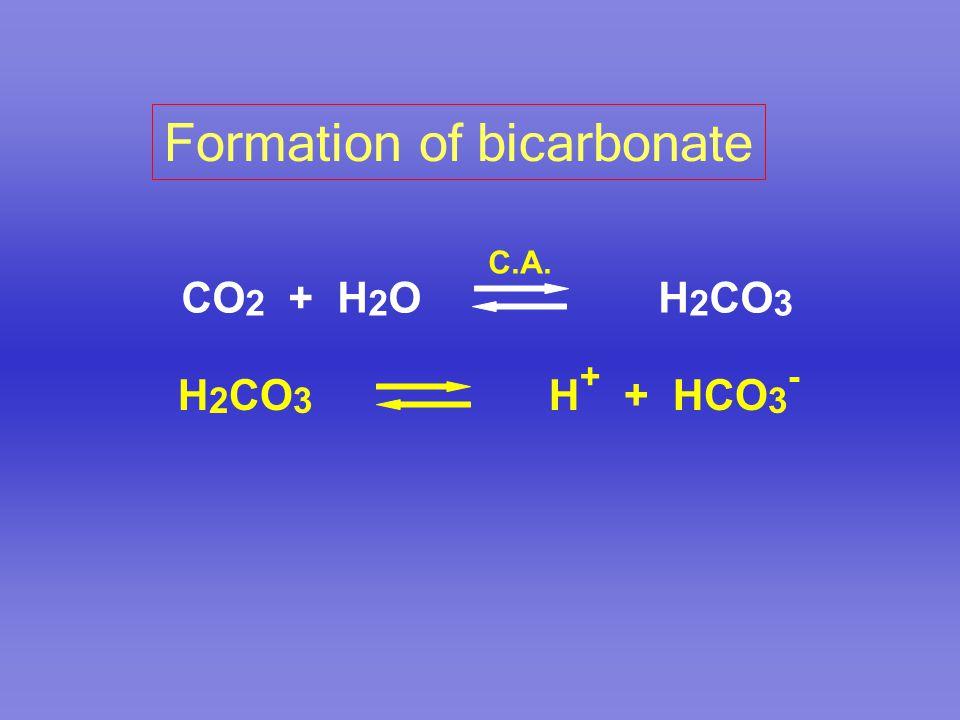 CO 2 + H 2 O H 2 CO 3 C.A. H 2 CO 3 H + + HCO 3 - Formation of bicarbonate