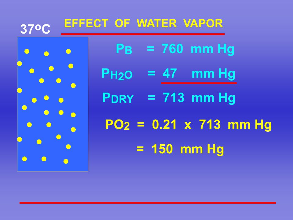 PO 2 = 0.21 x 713 mm Hg = 150 mm Hg P B = 760 mm Hg P DRY = 713 mm Hg 37 o C EFFECT OF WATER VAPOR P H 2 O = 47 mm Hg