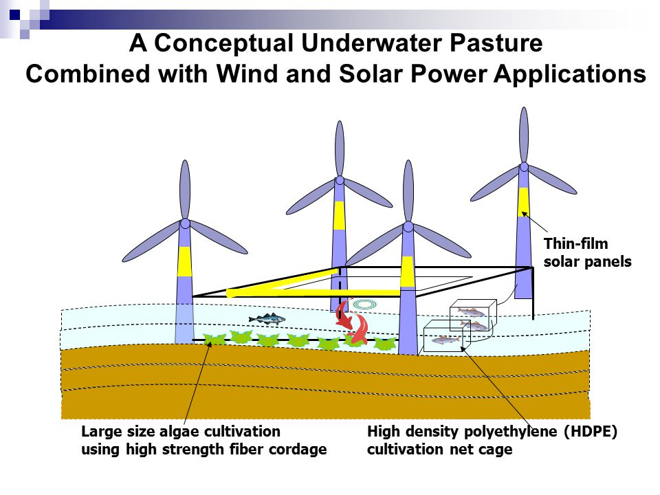 A Conceptual Underwater Pasture Combined with Wind and Solar Power Applications Large size algae cultivation using high strength fiber cordage Thin-film solar panels High density polyethylene (HDPE) cultivation net cage