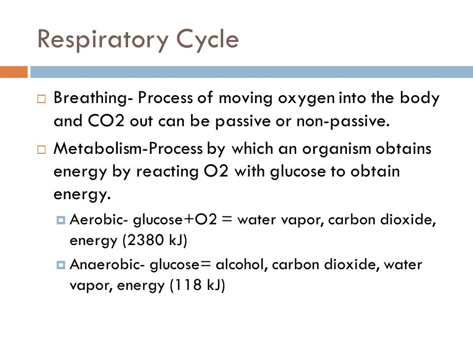 Respiratory Cycle  Breathing- Process of moving oxygen into the body and CO2 out can be passive or non-passive.