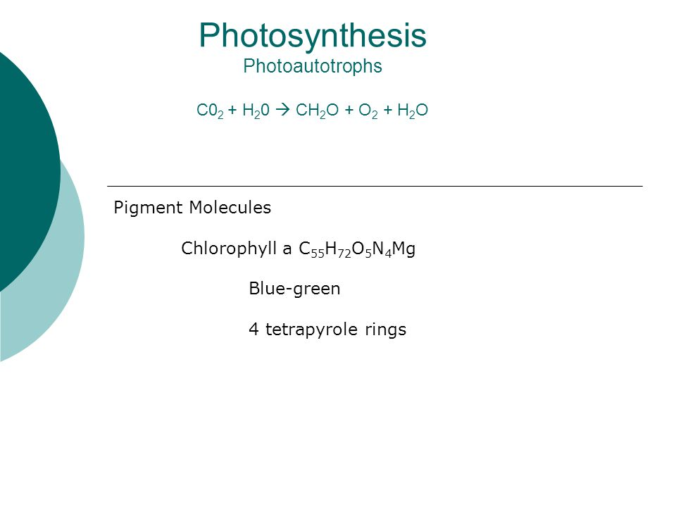 Photosynthesis Photoautotrophs C0 2 + H 2 0  CH 2 O + O 2 + H 2 O Pigment Molecules Chlorophyll a C 55 H 72 O 5 N 4 Mg Blue-green 4 tetrapyrole rings