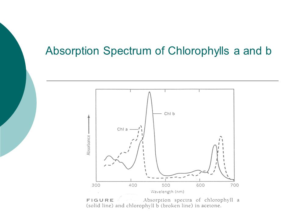 Absorption Spectrum of Chlorophylls a and b