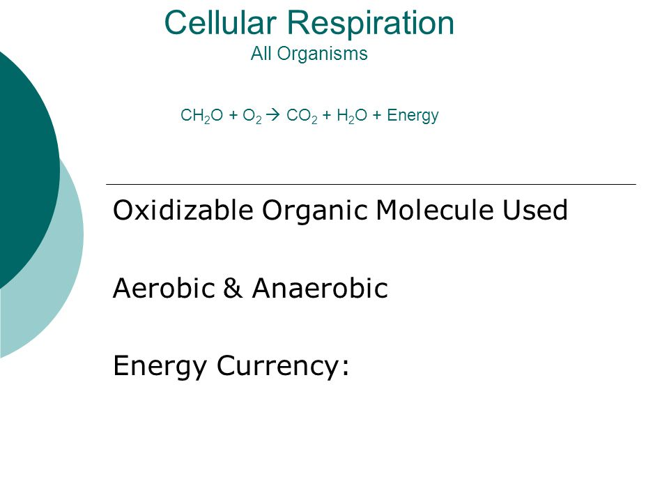 Cellular Respiration All Organisms CH 2 O + O 2  CO 2 + H 2 O + Energy Oxidizable Organic Molecule Used Aerobic & Anaerobic Energy Currency: