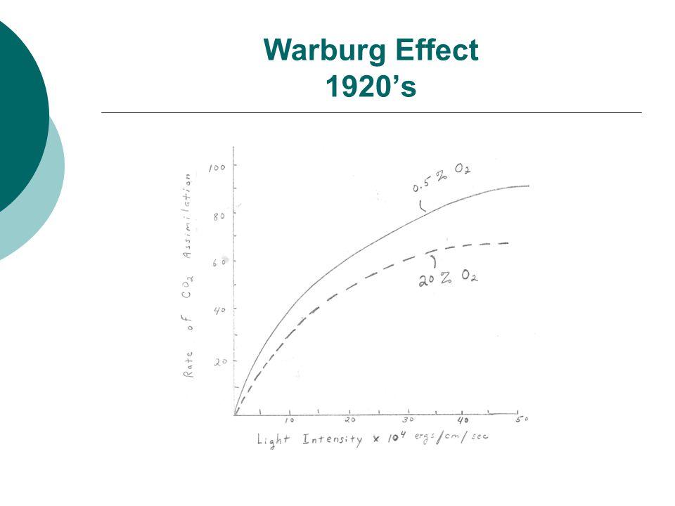 Warburg Effect 1920's