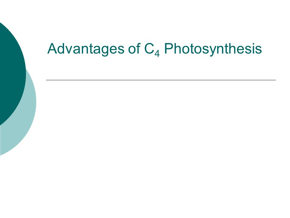 Advantages of C 4 Photosynthesis