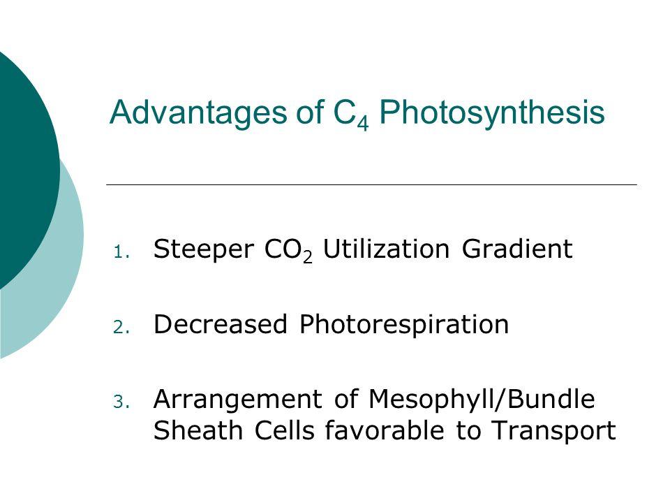 1. Steeper CO 2 Utilization Gradient 2. Decreased Photorespiration 3. Arrangement of Mesophyll/Bundle Sheath Cells favorable to Transport