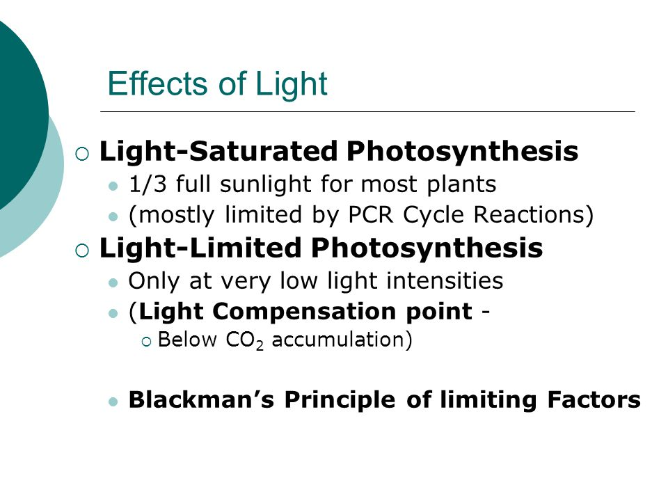 Effects of Light  Light-Saturated Photosynthesis 1/3 full sunlight for most plants (mostly limited by PCR Cycle Reactions)  Light-Limited Photosynthesis Only at very low light intensities (Light Compensation point -  Below CO 2 accumulation) Blackman's Principle of limiting Factors