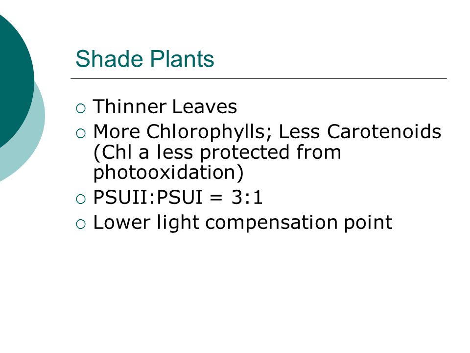 Shade Plants  Thinner Leaves  More Chlorophylls; Less Carotenoids (Chl a less protected from photooxidation)  PSUII:PSUI = 3:1  Lower light compensation point