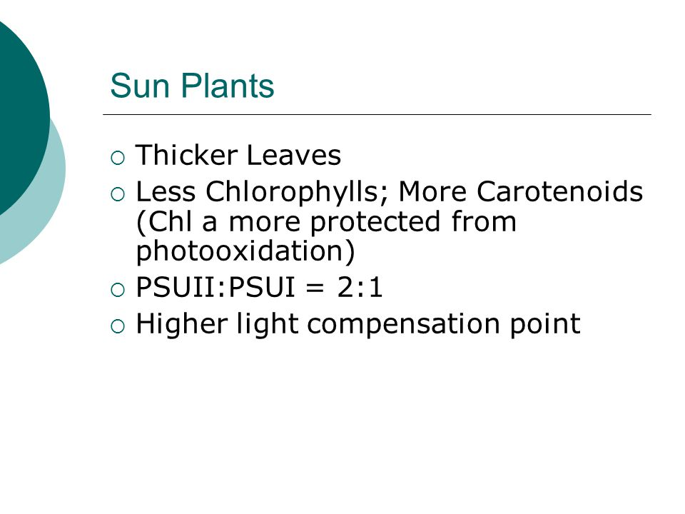 Sun Plants  Thicker Leaves  Less Chlorophylls; More Carotenoids (Chl a more protected from photooxidation)  PSUII:PSUI = 2:1  Higher light compensation point