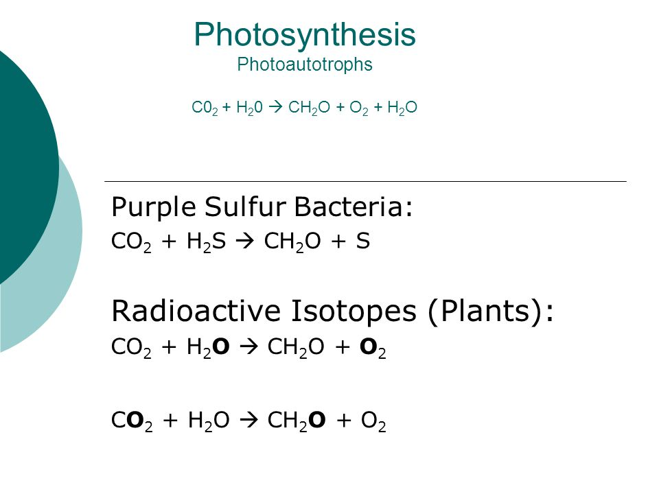 Photosynthesis Photoautotrophs C0 2 + H 2 0  CH 2 O + O 2 + H 2 O Purple Sulfur Bacteria: CO 2 + H 2 S  CH 2 O + S Radioactive Isotopes (Plants): CO 2 + H 2 O  CH 2 O + O 2